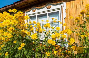 Yellow flowers in front of village house