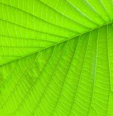 fine leaf texture