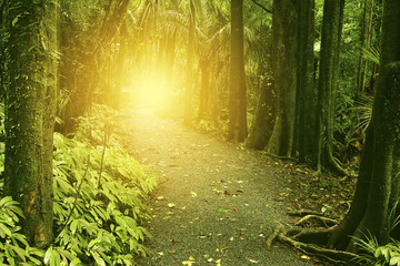 Walking trail sunlight