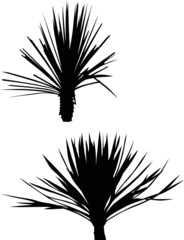 black small two palm trees isolated on white