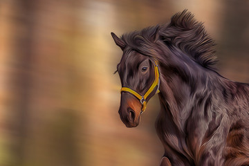 Drawing of a horse, portrait,