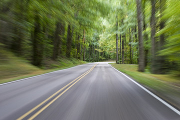 Motion Blur Forest Road