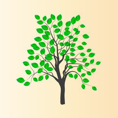 Vector drawing of a young tree with green leaves
