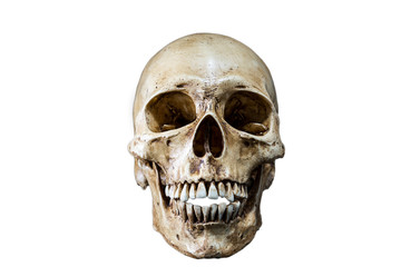 Isolated Skeleton head