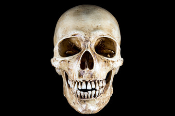 Isolated Skeleton head in black background