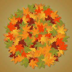 autumn background of leaves round maple.