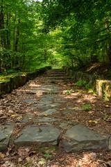 winding stone steps with foliage horizontal