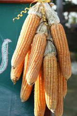Corns hang to dry