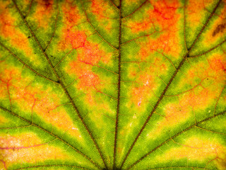 Abstract leaf closeup