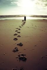 le chemin du bord de mer