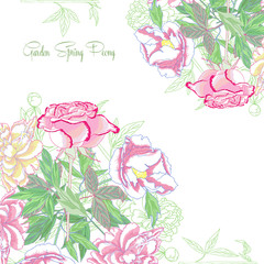 Background with  peonies and pink rose_-03