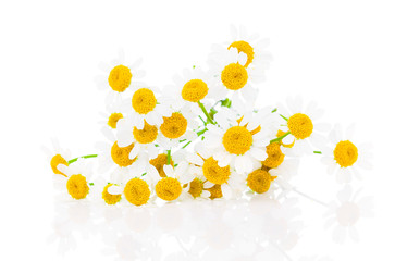 flower camomile isolated on white background
