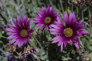 fiori 88