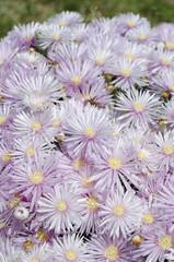 fiori 91