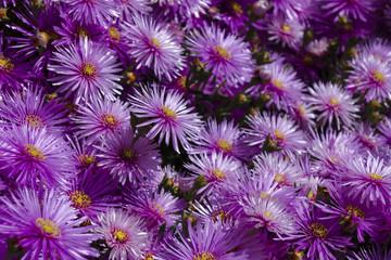 fiori 92