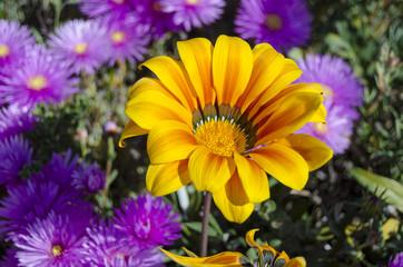 fiori 94