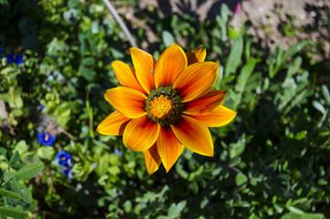 fiori 95