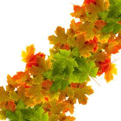 Herbstfreisteller Blätter