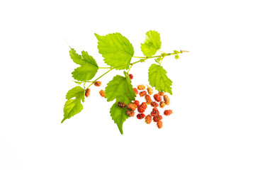 Mulberries on a white background.