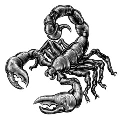 Vintage woodblock style scorpion