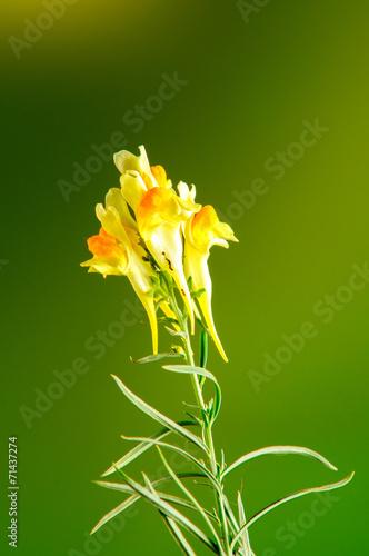 Fiore Giallo Sfondo Verde E Giallo Foto In Studio Stock Photo And