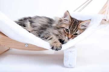 Katzenbaby in er Hängematte