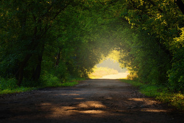 Country road through the green wood