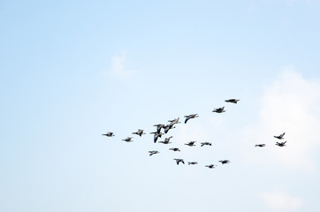 Geese formation