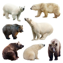 Wall Mural - Set of bears over white