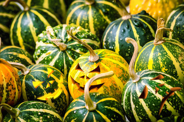 Smiling Jack-O-Lantern. Close-up of many small pumpkins