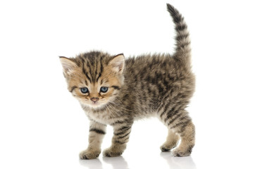 Cute tabby kitten on white background