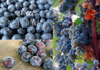 autumn background with plum and grapes
