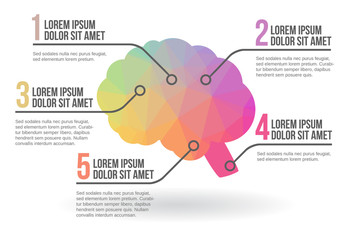 Human brain infographic, vector illustration