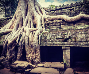 Wall Mural - Ancient ruins and tree roots, Ta Prohm temple