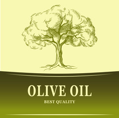 Olive oil. Vector  olive tree. For labels, pack.