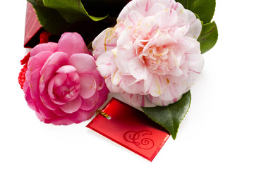 pink camelia and heart isolated