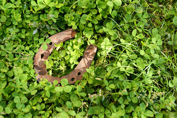 Wall Mural - Old horse shoe on green clover grass, outdoors