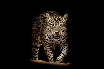 Canvas Prints Jaguar portrait