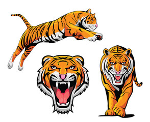 Tiger Illustration Set