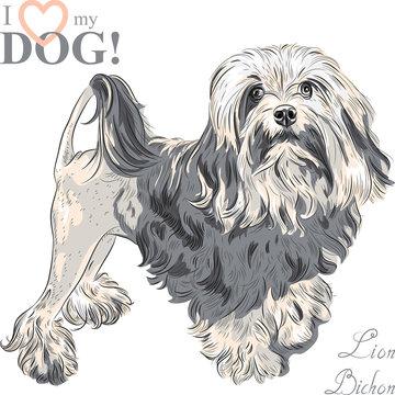 vector dog breed Lowchen