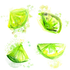 Four slices of green limes. Watercolor illustration, vector