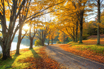 Lake pathway with yellow leaves Wall mural