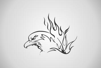 animal, bird, fire, wild, eagle,eagle head
