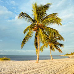 Coconut tree on a white sand beach.