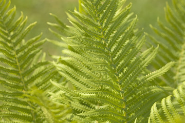 Abstract background of leaves. Bokeh blurred image.