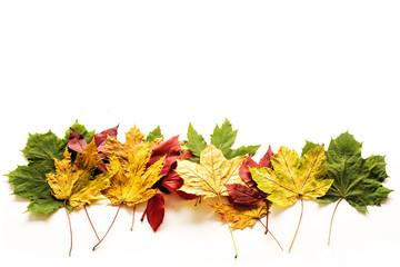 Bilder Und Videos Suchen Herbst Clipart