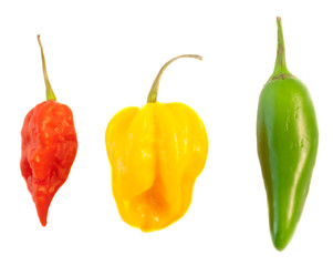 Canvas Prints Hot chili peppers still life of chilli