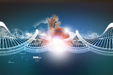 Dna model with human heart
