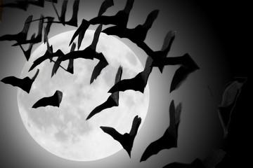 bats fluttering