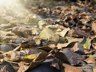 fallen leaves illuminated by the sun close up